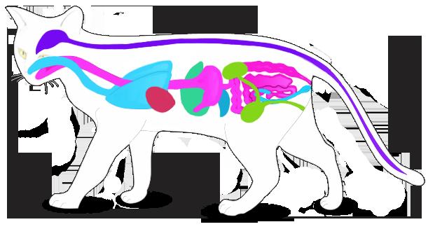 Заболевания кошки